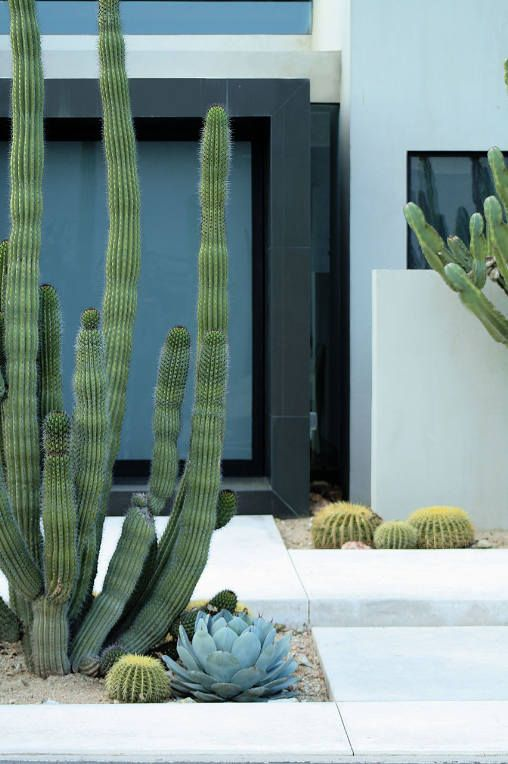 I've always had a thing for cacti. A pot or two about the house has been more…
