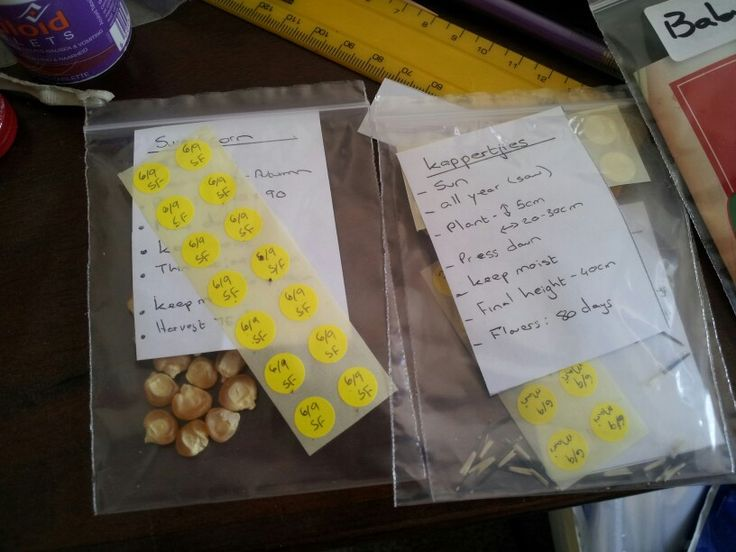 Sorting the seeds according to how they will be planted.
