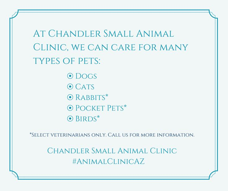 At Chandler Small Animal Clinic we care for many types of pets