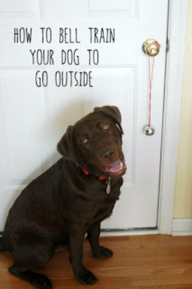 Do Dogs Get Fleas In Idaho