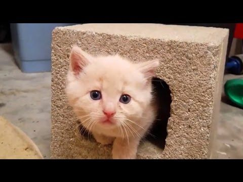 Cute Kittens Videos Compilation 2017 - http://funnypetvideos.net/cute-kittens-videos-compilation-2017/