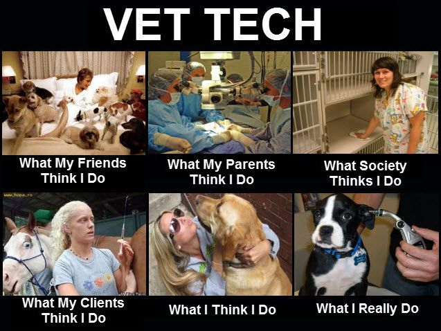 Best 25+ Vet tech job description ideas on Pinterest Veterinary - vet tech job description