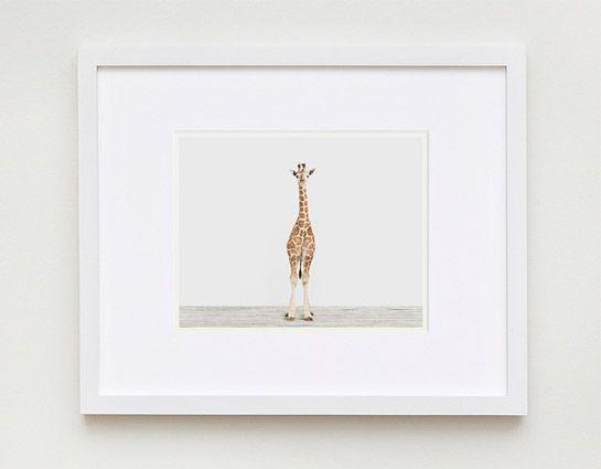Baby Giraffe No. 3 | Sharon Montrose | The Animal Print Shop | Baby Animal Photography Prints