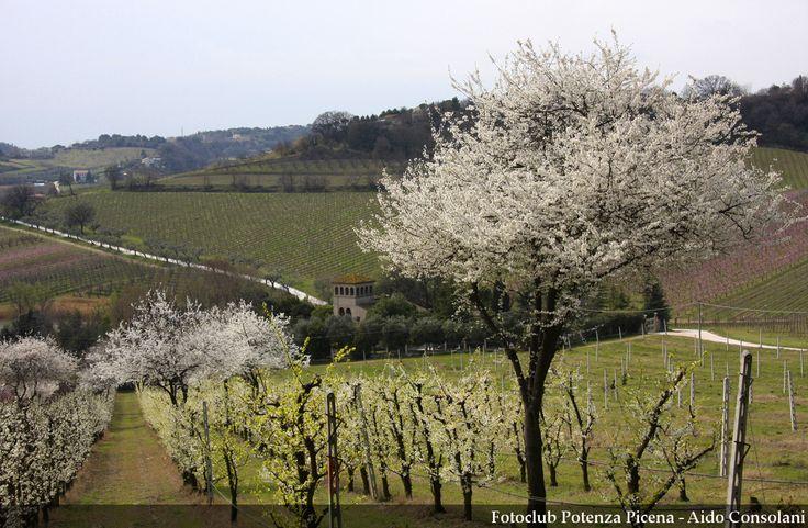 primavera in fiore a #PotenzaPicena