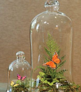 Bell Jar Terrariums