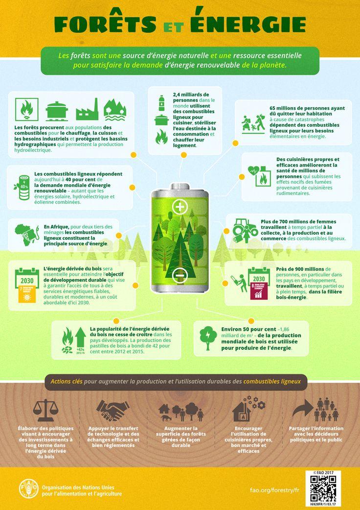 Forêts et énergie