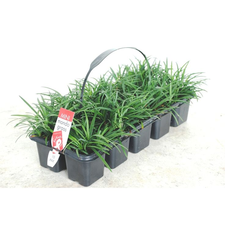 how to kill grass bunnings