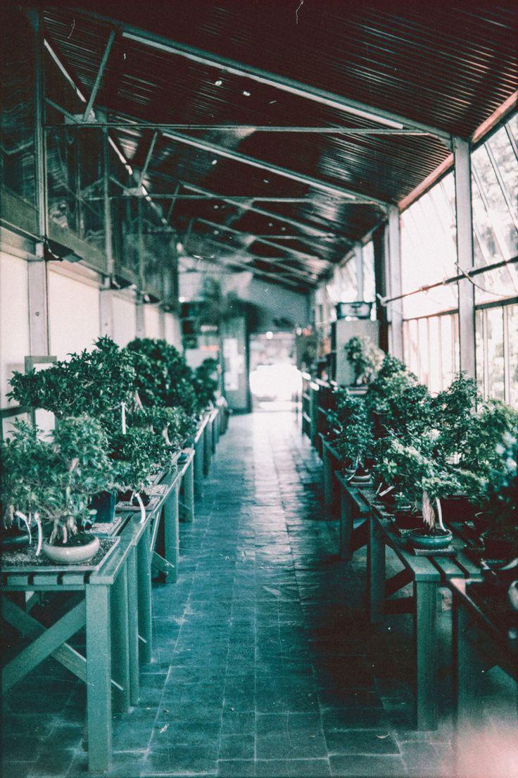 Bonsai, Museum, Japan, Garden, Trees, Culture, Analogic, Canon, AE-1, Film, 35mm, Grain, Lens Flare, Milan, Italy, Sun