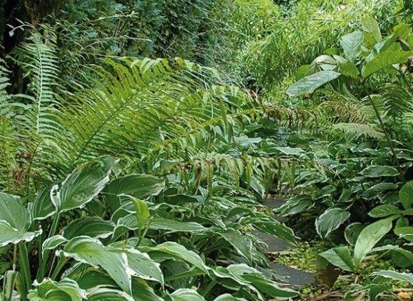 1000 ideas sobre jard n de sombra en pinterest plantas - Plantas de sombra para jardin ...