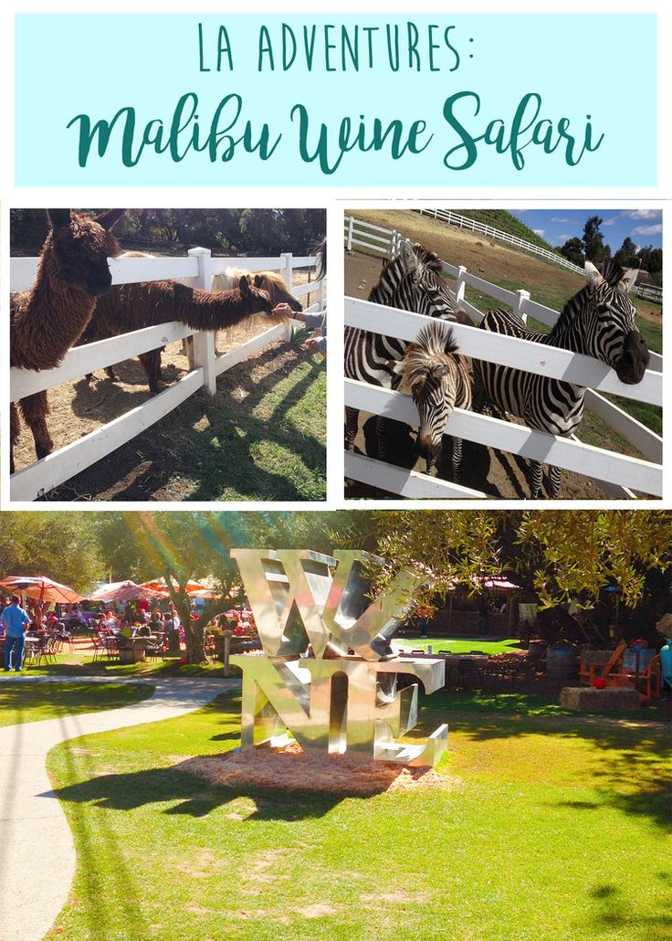 Malibu Wine Safari in California  Wine and wild animals, what could be better?  Check out our visit on the blog!  Wandering Jokas Travel Blog
