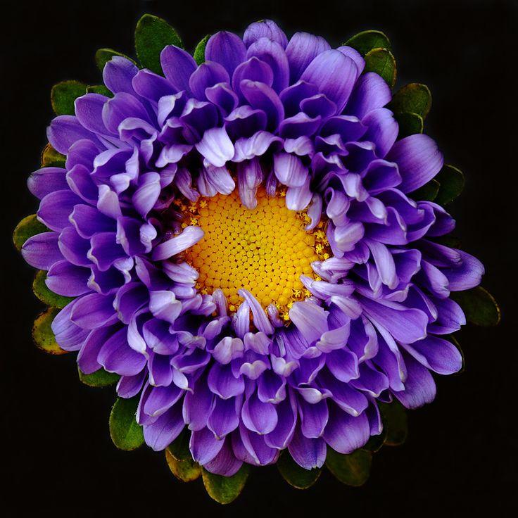 1000 Wallpaper Bunga Anyelir  Paling Baru