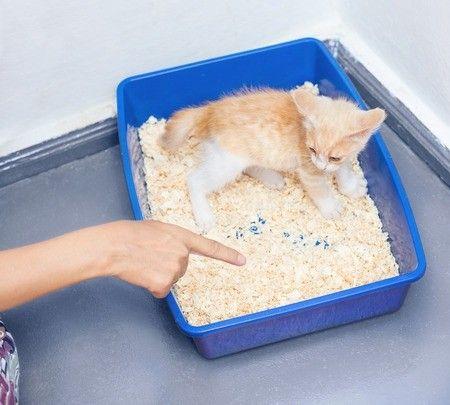 Wie gewöhnt man Katzen ans Katzenklo - http://www.katzenklo-kaufen.de/wie-gewoehnt-man-katzen-ans-katzenklo/