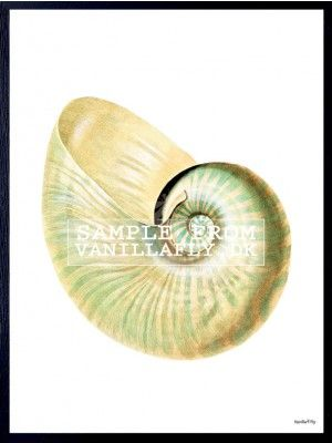 POSTER PEARLY CONCH 3 (3-pack) #PSC107