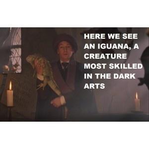 Now I know why he had an iguana!!Hogwarts, Solemnly Swear, Harrypotterismylife 3, Wonder, Iguana, Hee Hee, Funny Stuff, Harry Potter, So Funny