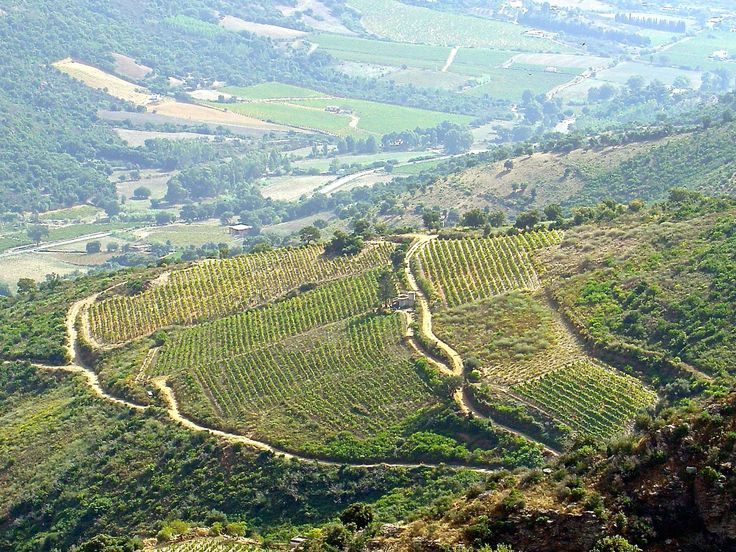 The hills covered with vineyards in Jerzu, #Ogliastra #Sardinia #italy
