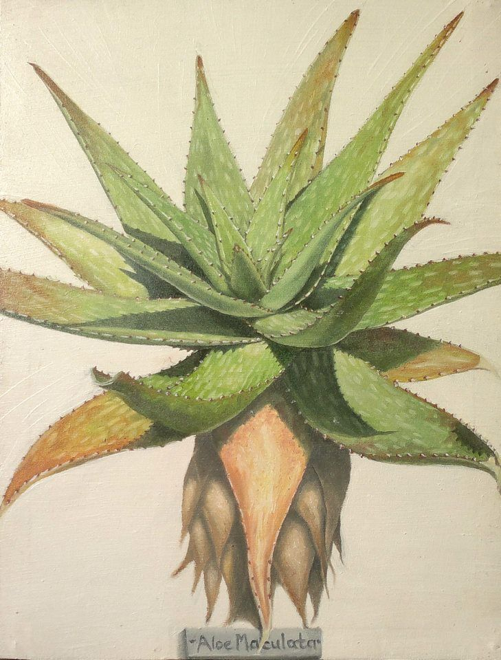 Aloe Maculata {Commission} ~ Block Mounted Oil Painting by Dawn Du Preez #DawnDuPreez