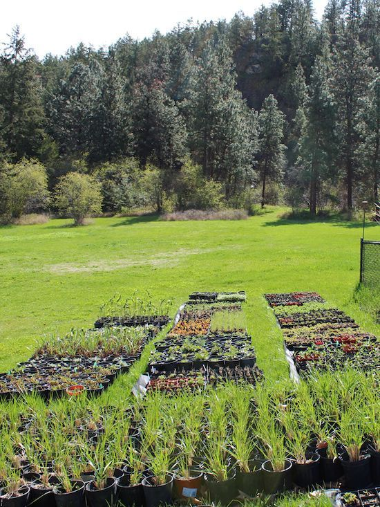Backyard Cash Crops 5 easy to grow plants to sell on your homestead | homestead crops