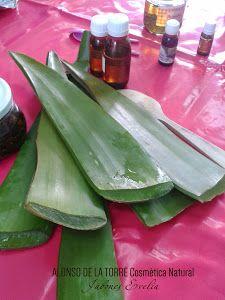 Una de las plantas más utilizadas a nivel medicinal y cosmético. ¡Ahora también podrás en casa!