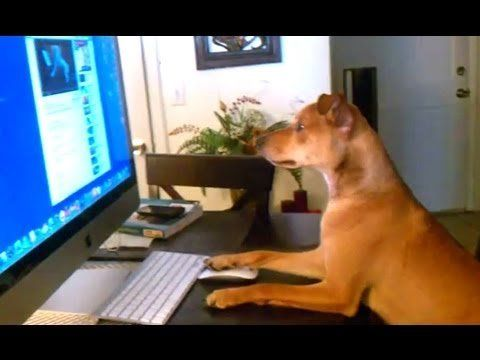 Compilation of dogs acting like humans (VIDEO)