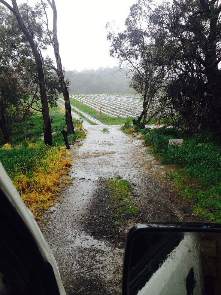 A little wet here in the Adelaide Hills today! Our farm track is now a river. Anyone got a boat?  #beerenberg #beerenbergfarm #adelaidehills #rainydays