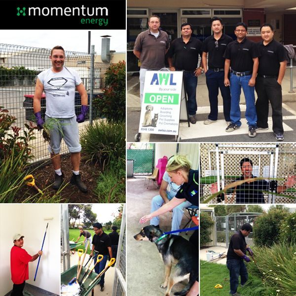 Momentum Energy's volunteer program encourages staff to take a full day of paid volunteering leave every year to spend time giving back to the community. Back in February the entire SA team volunteered at the Animal Welfare League Australia, a leading animal shelter in South Australia.