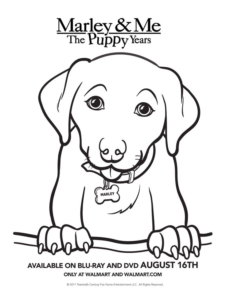 baby puppy coloring pages the puppy years printable activity