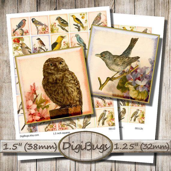 Printable Birds on Vintage Floral Background, Digital Collage Sheet, 1.5 inch 1.25 inch Squares, Old Bird Images, Instant Download, a1