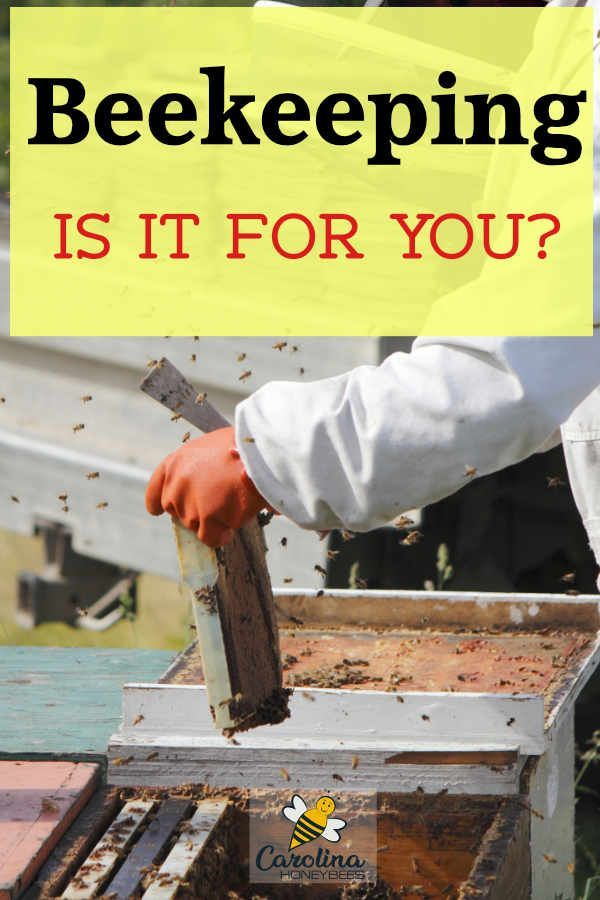 Beekeeping The Art Of Managing Honey Bees Bee Keeping Bee