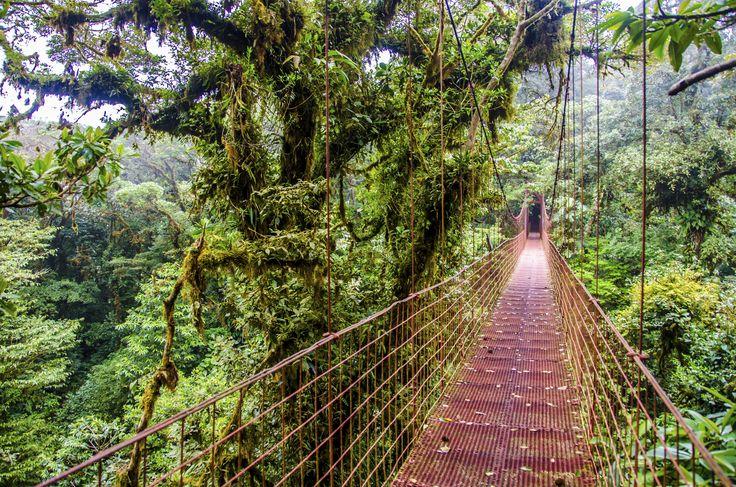"""Monteverde tågeregnskov. Skoven er beliggende i 1.440 meters højde, og er kendt som """"skoven i skyerne"""". De varme caribiske vinde blæser fra havet og ind mod de høje bjerge og når vindene presses op i disse højder køles de af, og der dannes derved lave skyer og tåge mellem trækronerne. Det betyder også, at der kan være kølige dage."""