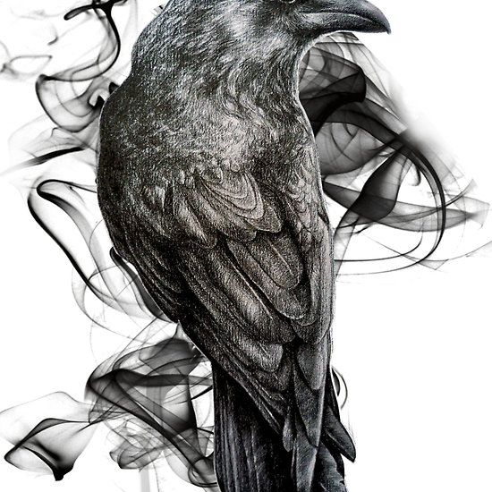 crow gothic bird raven realism drawing sketch tattoo