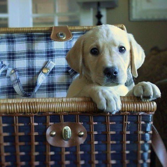 Tag an Animal Lover below! #cute #happy #petsagram #doglover #hound #pup #dogoftheday #dogs #animals #pet #ilovemydog #dog #instagood #lovedogs #dogsofinstagram #lovepuppies #pets #instapet #adorable #picoftheday  #followforfollow #pictureoftheday #dogstagram