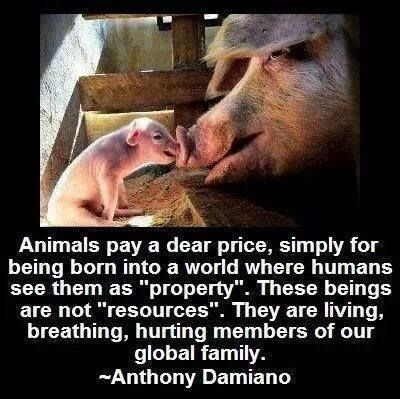 "Animals pay a dear price, simply for being born into a world where humans see them as ""property"" ~ courtesy Anthony Damiano #vegan"
