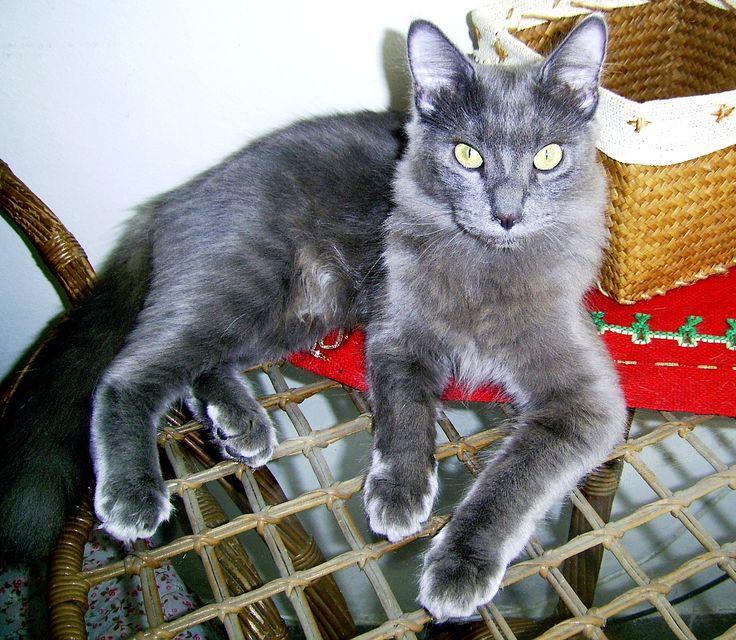 Sleeveless Top - Victorian Kitten Lady Nap by VIDA VIDA Discounts Cheap Online Cheap Best Place txC36xjT1