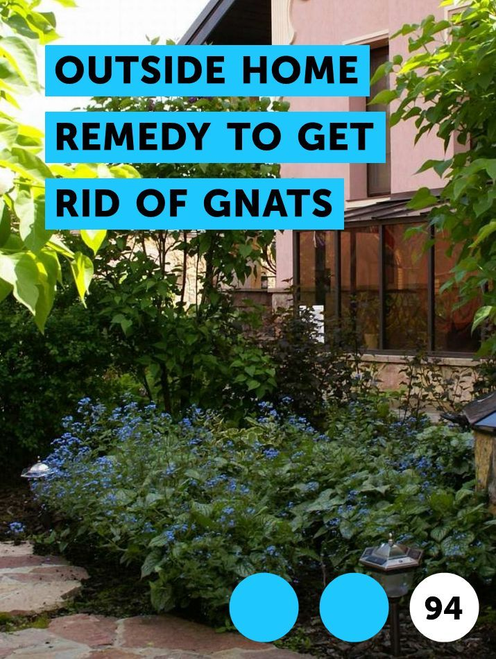 How To Get Rid Of Gnats In Garbage Can