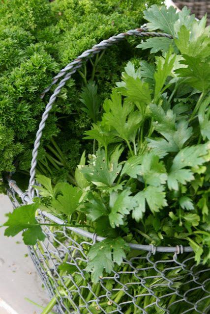 images  herb garden  pinterest herb pots
