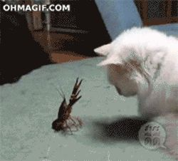 Animals Trolling Other Animals (15 GIFs) « Regretful Morning