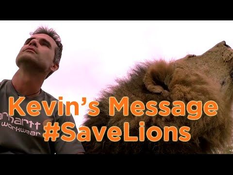 Help this video go viral and help raise global awareness on saving lions. -- Lions: Endangered Species | The Lion Whisperer