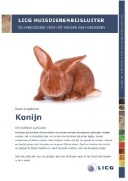 De grote hangt af van het formaat en het aantal konijnen. Een konijn moet in zijn hok kunnen lopen en op zijn achterpoten kunnen staan.  Buitenhok:  2 dwerg = 150 x 60 x 60 cm  2 kleine = 3 tot 4 m2 2 grote (> 5kg) =200 x 80 x 80 cm   Binnenhok:  2 dwerg = 80 x 150 cm 2 van 2 kilo => 80 x 200 cm 2 tussen 2,5 en 5 kilo = 0,3 m2 per kilo lichaamsgewicht > 5 kilo = 0,25 m2 per kilo lichaamsgewicht  voorbeeld: voor 2 Vlaamse reuzen van 7 kilo komt u dan op 3,5 m2, 100 x 350 cm.