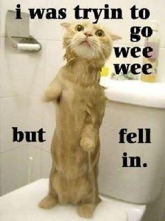 Aaahhhh.....poor kittyCute Animal, Toilets Training, Funny Pics, Funny Pictures, Funny Cat, Funny Quotes, Funny Animal, Kitty, Animal Funny