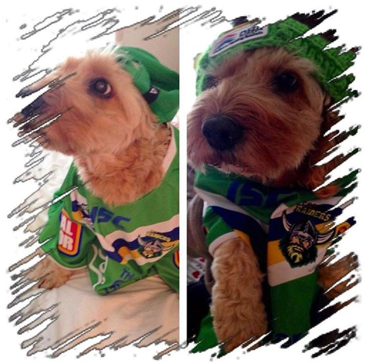 #WearGreen2015 Canberra Raiders pets