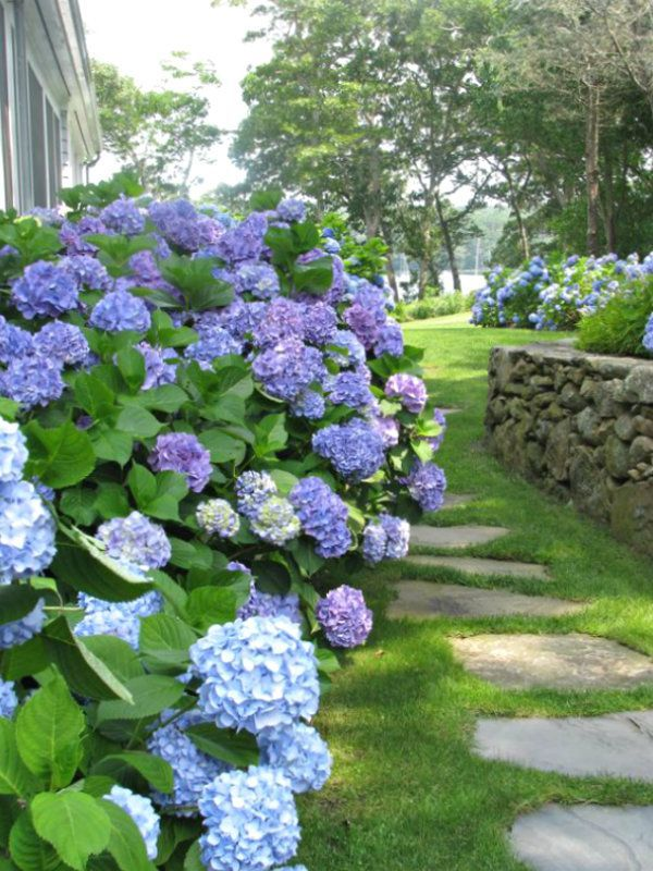 Hydrangeas are the summer snowball in the most spectacular color palette! What's your favorite shade of hydrangea?