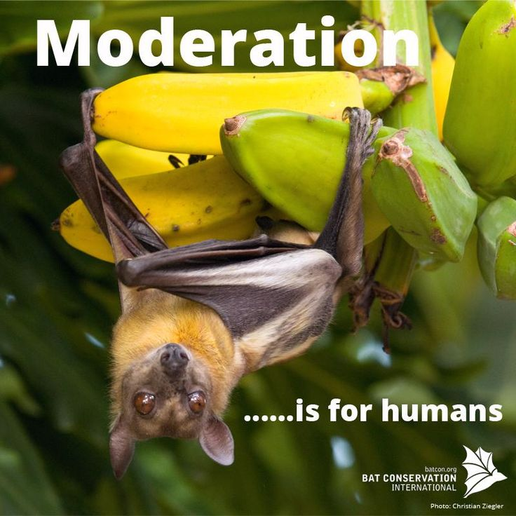 """Moderation.. is for humans"" Congratulations Laura Williams, winner of our #SillySaturday caption competition! #bats"
