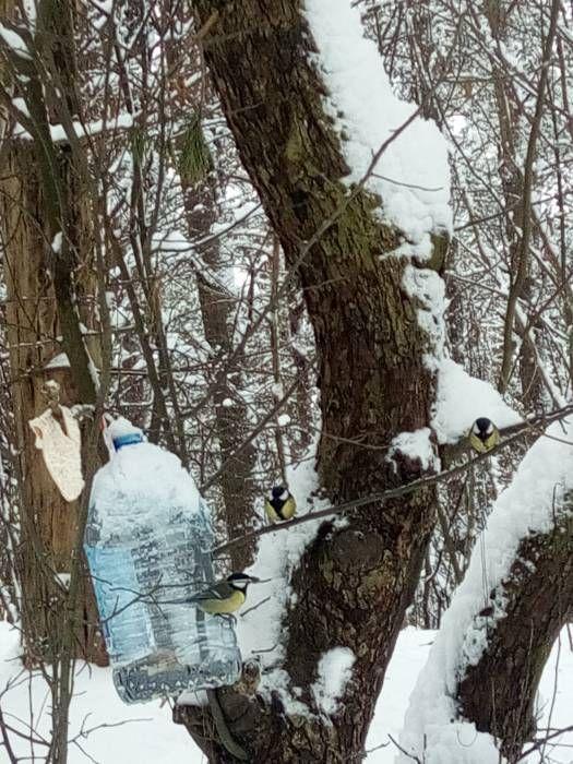 В лесу за станцией Лучеса кормушки для птиц висят уже не первый год. Фото Саши Май В Витебске во многих местах развешаны кормушки для птиц. И нервнодушные горожане не забывают про пернатых. Но, подойдя поближе к импровизированным приспособлениям, все чаще замеча�