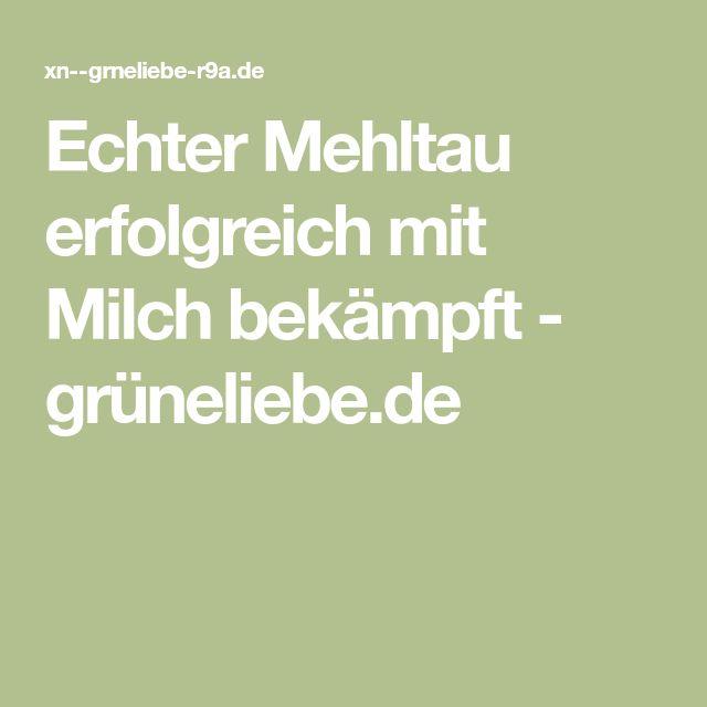 Echter Mehltau erfolgreich mit Milch bekämpft - grüneliebe.de