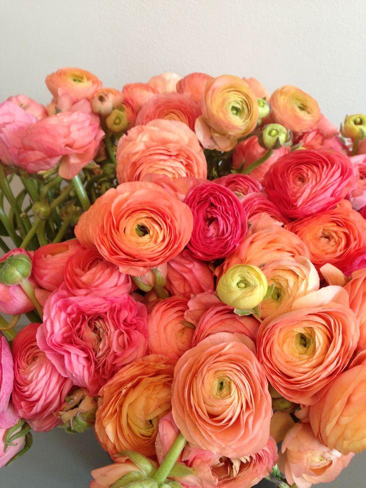 wedding flowers ranunculus orange pink - Google Search
