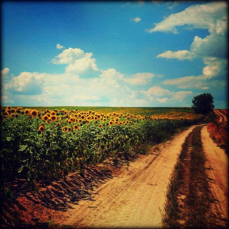 Almádi Ildikó Egy gyönyörű nyári nap Bokod irányába haladva pillantottam meg ezt a szép tájat...rögtön megálltam,hogy lefotózhassam! Több kép Ildikótól: www.facebook.com/ildiko.almadi