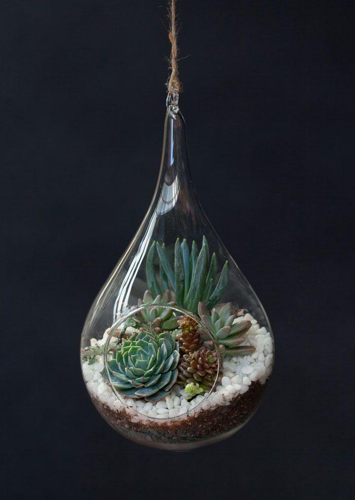 Teardrop-terrarium-echeveria-DIY