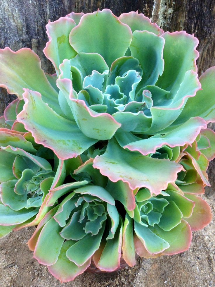 492 best images about jardines matas ornamentales varios for Matas ornamentales