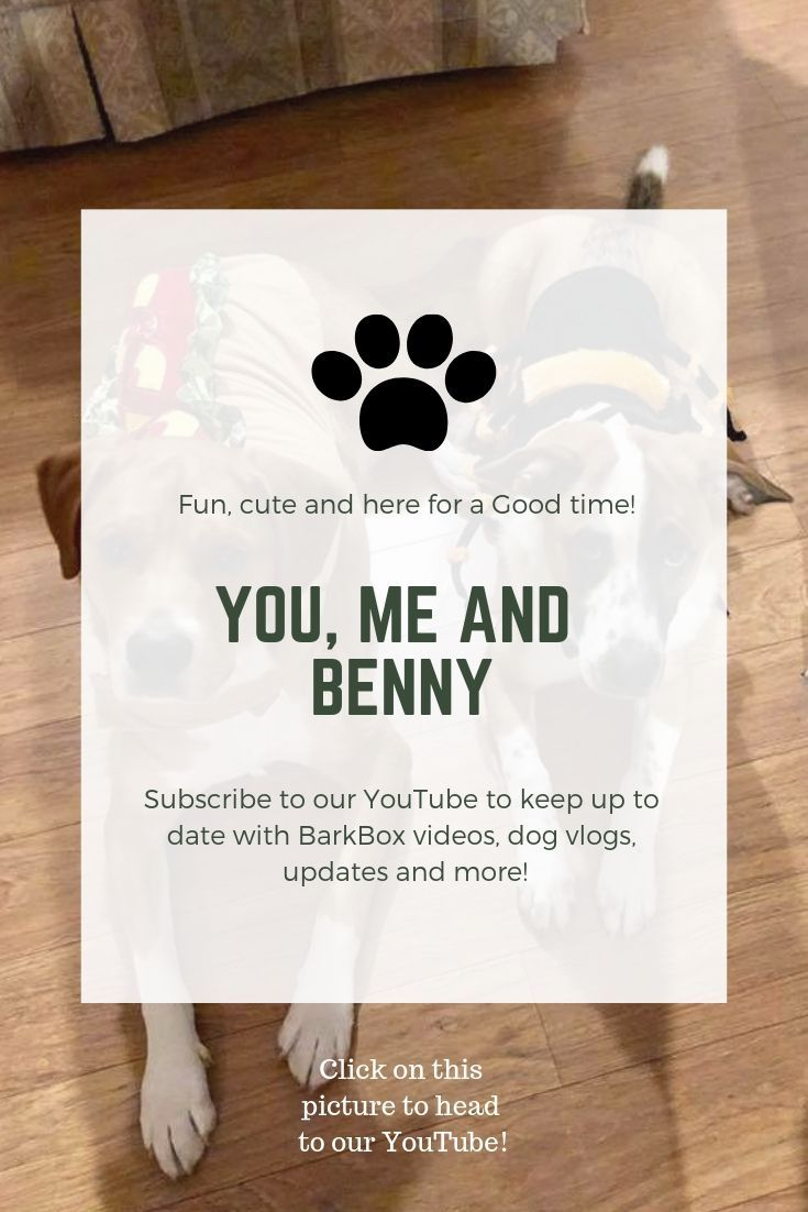 You Me And Benny Youtube Channel Puppies Cute Animals Puppy Mom Cute Animal Videos