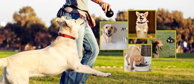 How to make your dog happy? #doghapiness #happydog #dogcrae #dog #cutedog